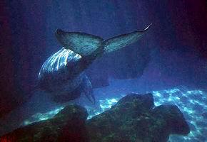 """Obrázek """"http://www.czsk.net/svet/obrazky/velryba.jpg"""" nelze zobrazit, protože obsahuje chyby."""